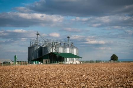 silver silos in corn field Stock Photo - 16380519