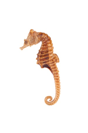 Sea Horse closeup 免版税图像