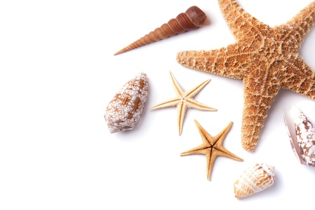Shells and starfishes collections isolated on white background photo