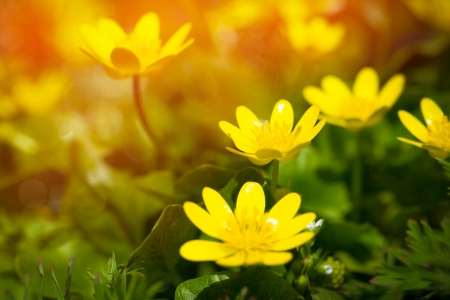 yelow: Yelow flower close up background