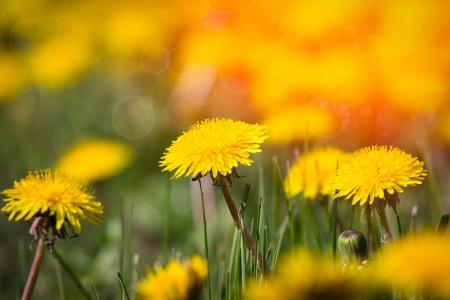 yelow: yelow spring  flowers Stock Photo