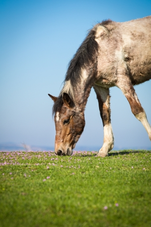 Horse on a spring pasture  photo