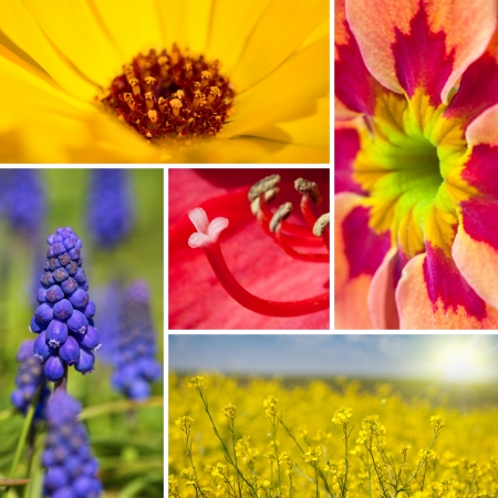 Beautiful spring flowers collage photo