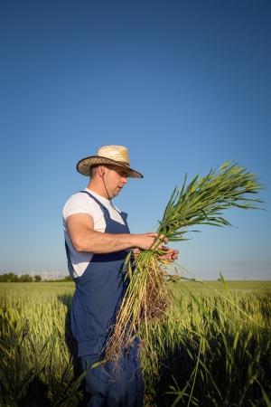 agriculturist: farmer in field