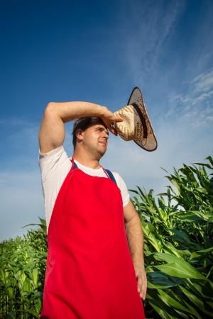 Farmer  analysing corn field Stock Photo - 20441669