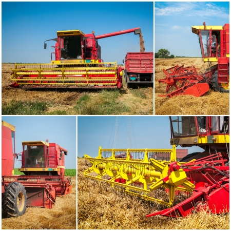 Wheat harvest collage photo