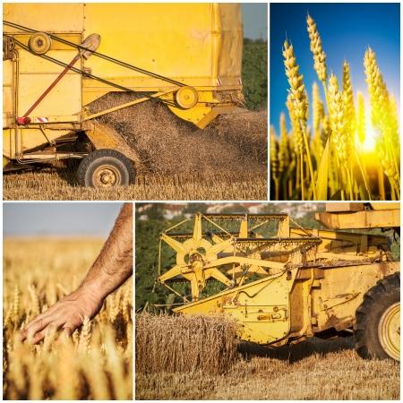 wheat harvest: Wheat harvest collage
