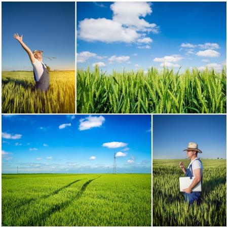 farmer fields collage 스톡 콘텐츠