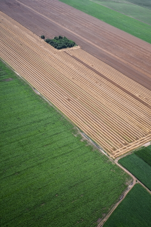 cropland: airview of the field