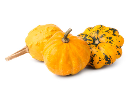 decorative pumpkins Stock Photo - 23015729