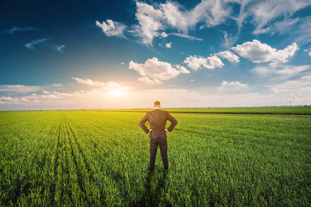 Businessman in a wheat field photo