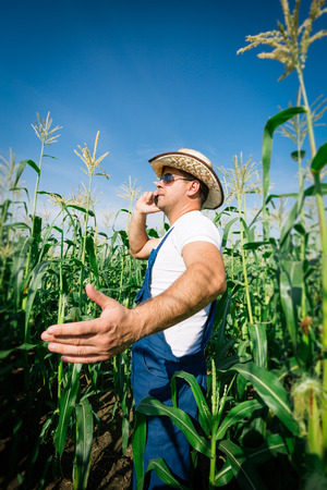 food inspection: Farmer inspecting corn plant in field