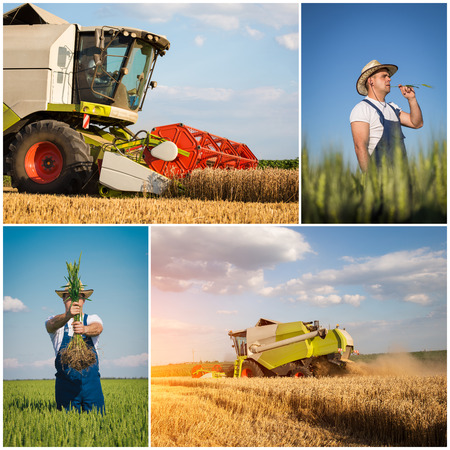 Wheat harvest - collage photo