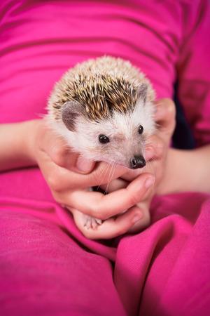 Hedgehog in hand photo