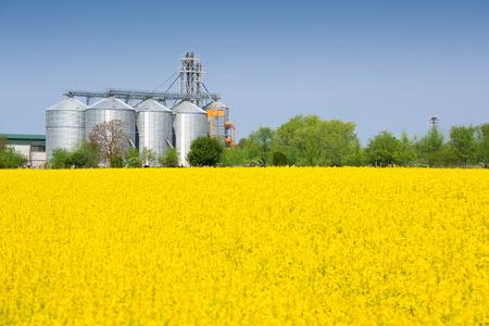 silo: Canola field and farm silo