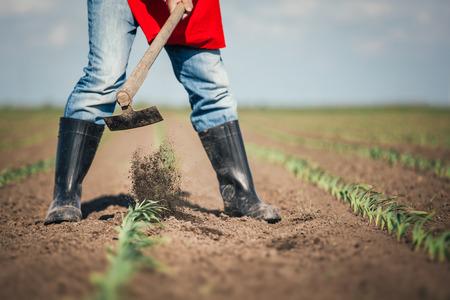 Handarbeit in der Landwirtschaft Standard-Bild - 41666485