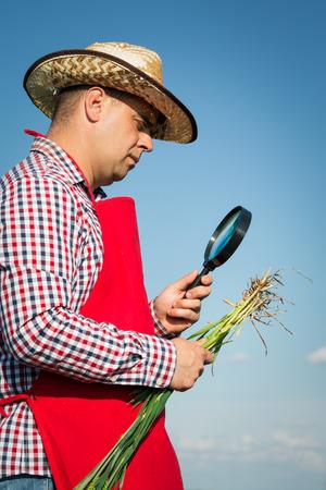 subsidy: Farmer checking his crops