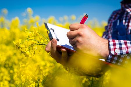 farmer inspect quality of canola field