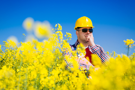 biodiesel: Worker in a rapeseed field doing inspection for biodiesel production