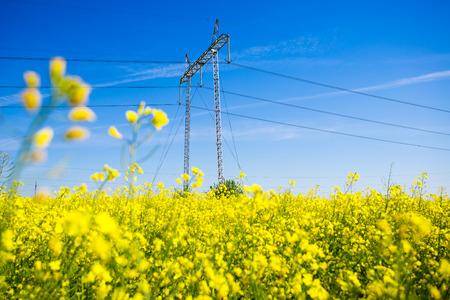 torres de alta tension: Las torres de electricidad en un campo de la violación