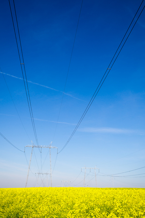 secluded: Electricity pylons in a field of rape