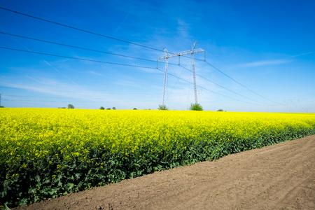 transmit: Electricity pylons in a field of rape