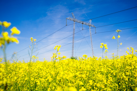 Electricity pylons in a field of rape
