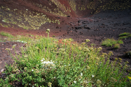 dejection: Volcanic rock on Etna, Italy
