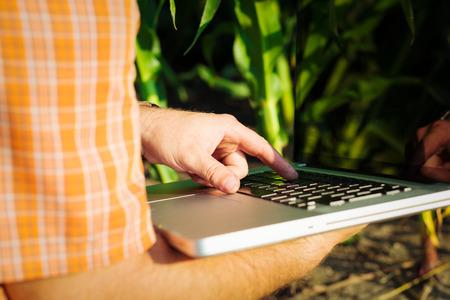 dearth: Farmer checking corn plants in the field