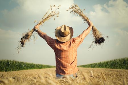 Farmer controleert de tarwekorrel in het veld