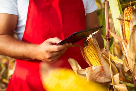 tablet: Farmer in cornfield using electronic tablet