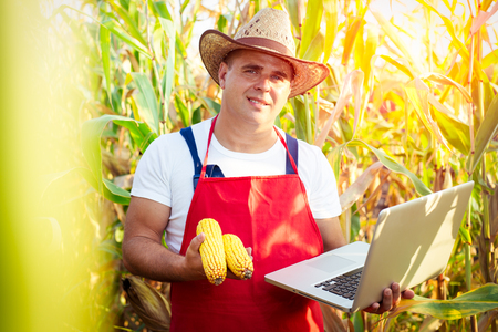 Farmer checking the quality of the corn crops Stock Photo