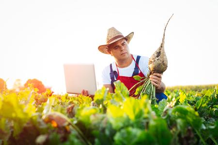 Farmer hält Zuckerrüben und Laptop im Feld Standard-Bild