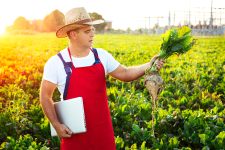 Farmer holding sugar beet and laptop in field