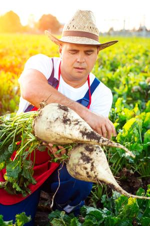 Zufriedene Landwirt hält Zuckerrüben