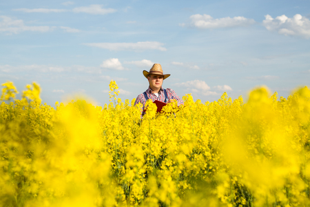 A farmer inspects rapeseed