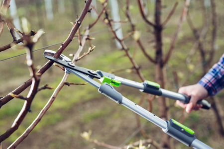 Farmer pruning fruit trees in spring garden