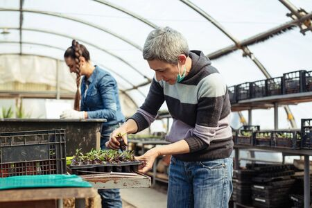 Senior and young women working in a greenhouse. Stock fotó