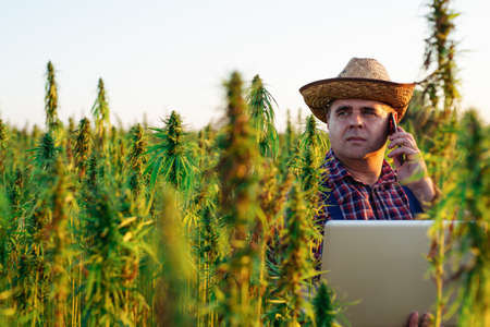 Farmer talking on the smart phone in his hemp field. Standard-Bild - 154197889