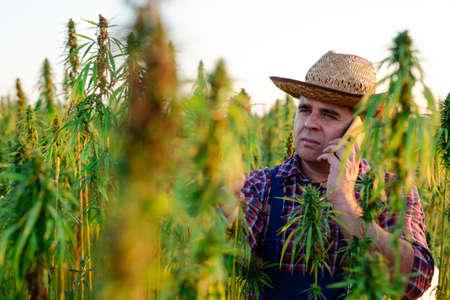 Farmer talking on the smart phone in his hemp field.