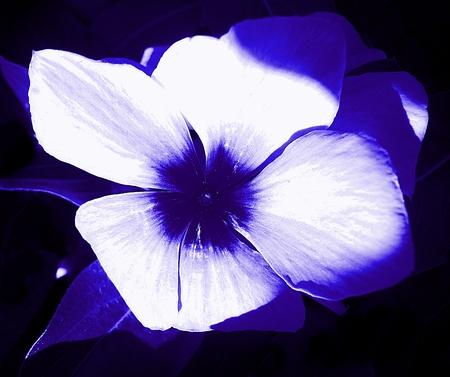 Bloem van blauw Stockfoto