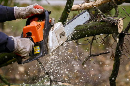 Cutting tree with a chainsaw Standard-Bild
