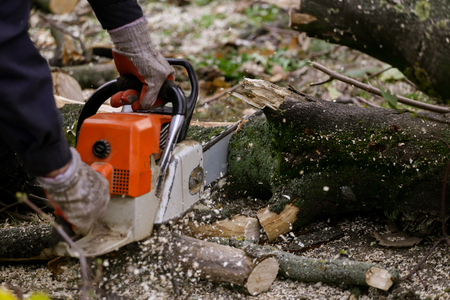 Cutting tree with a chainsaw Foto de archivo
