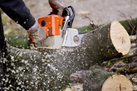 Cutting tree with a chainsaw Stock Photo