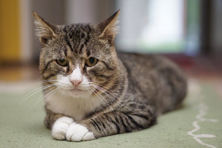 Cat in room isolated with blurred background Stock Photo