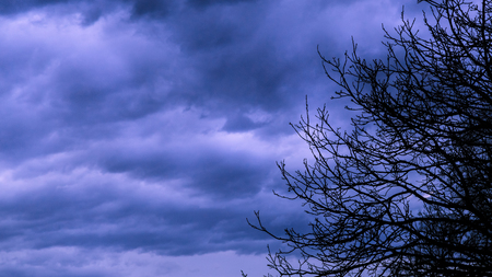 Silhouete of tree branches with  dark cloudy sky before a thunder-storm.