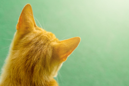 Close up of orange cat head from behind, green blurred background. Stock Photo