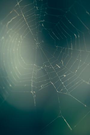 Close up of spider web avec arrière-plan flou