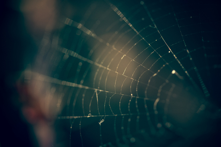 Close up of spider web with blurred background Banco de Imagens