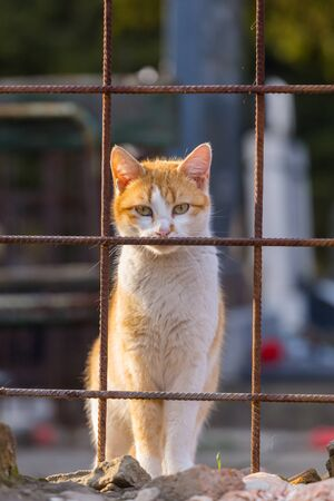 Orange and white cat standing on wall behind reinforced mesh